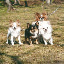 愛犬たち   スタッフブログ