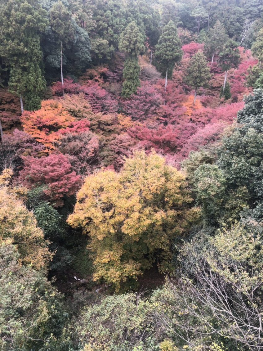 運動の秋、芸術の秋   スタッフブログ