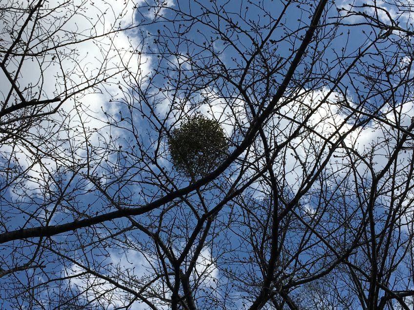宿り木   スタッフブログ