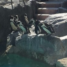 ファーストペンギン | スタッフブログ