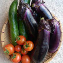 家庭菜園 | スタッフブログ